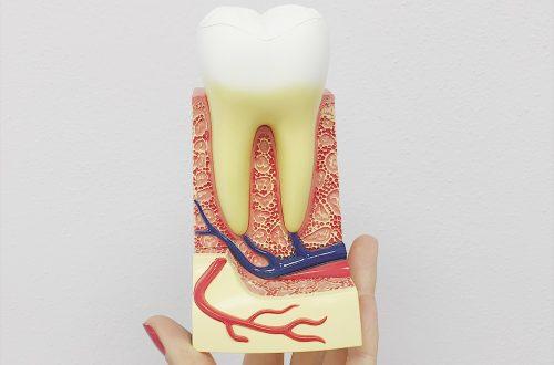 come è fatto il dente?